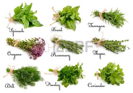 Nos aromates pices herbes - Herbes aromatiques cuisine liste ...