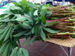 """Résultat de recherche d'images pour """"Les feuilles de manioc, riche en vitamine A et C"""""""