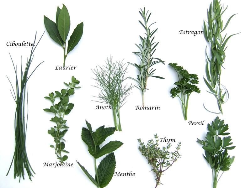 Herbes aromatiques 9426bd3716a9b90158253c615bd020e3